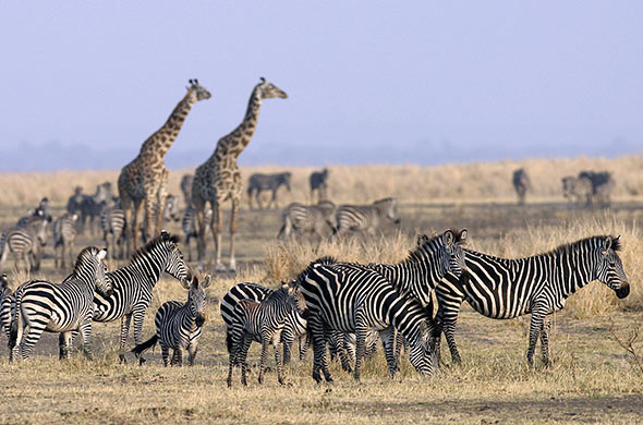 about-tanzania-chada-katavi-plains